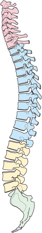 自律神経を整えることが更年期障害を早期に改善するポイントです。