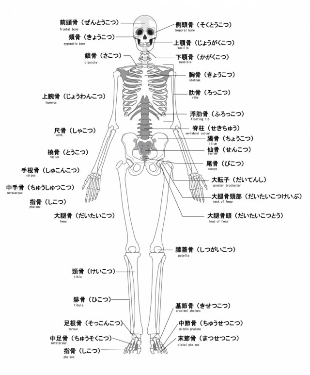 当院の膝痛へのアプローチは?