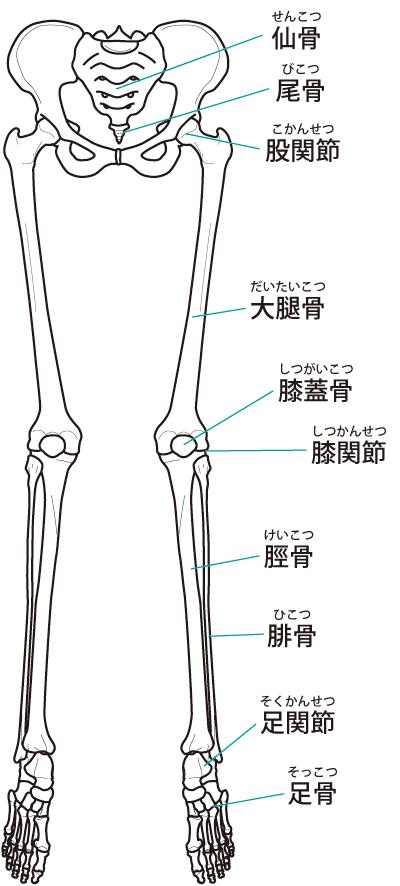 股関節痛は、痛いところだけでなく、全身のバランスを調整することが重要です。