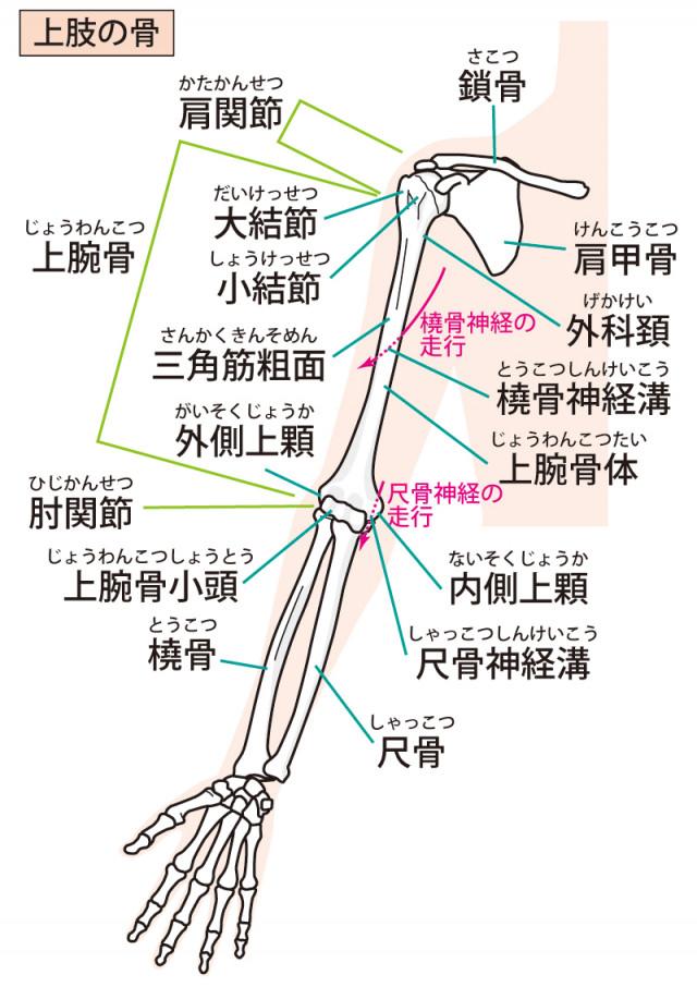 手首の痛みの原因は、腕の関節の歪みです。